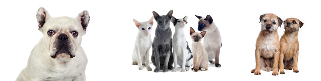 Pet sitting services, dogs and cats